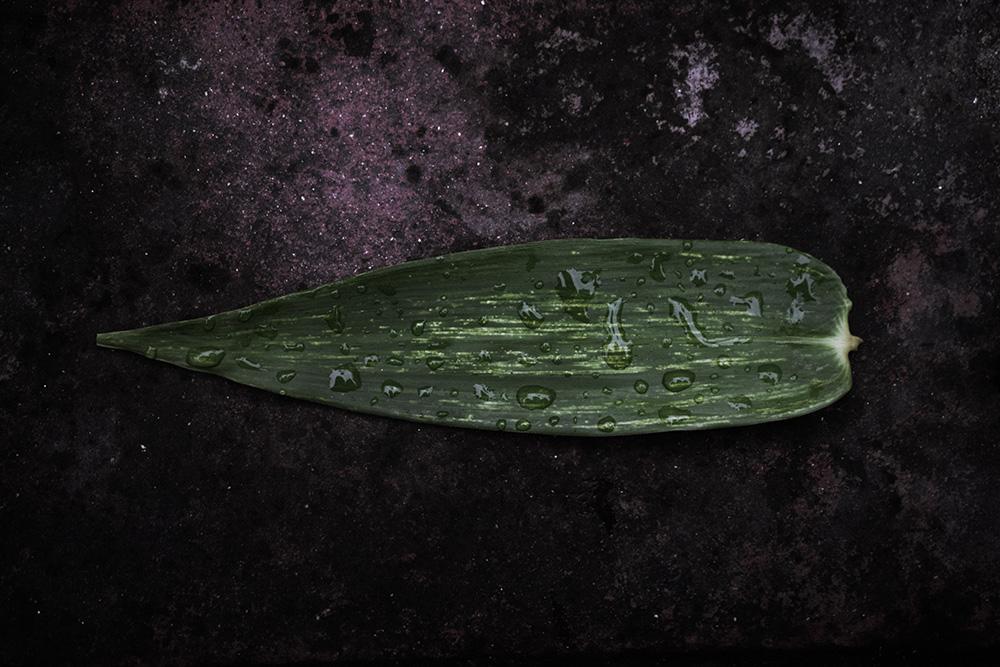 Bamboo Age Corrective Masque – October Member Gift