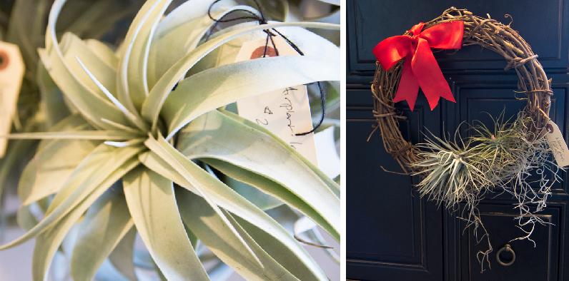 air plants wreathes anjou spa