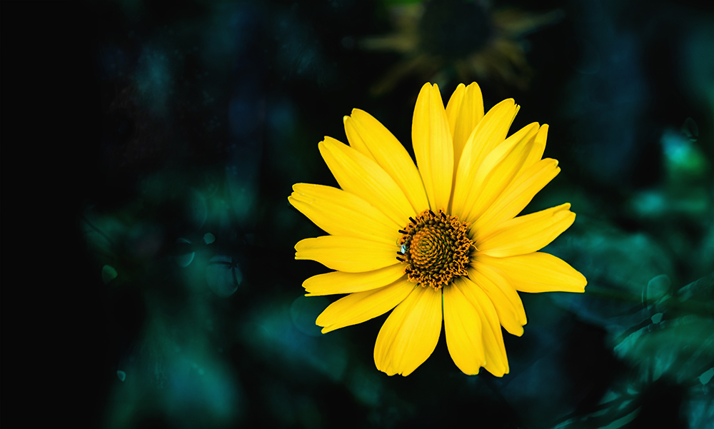 Calm Skin Arnica Booster Serum – July Member Gift